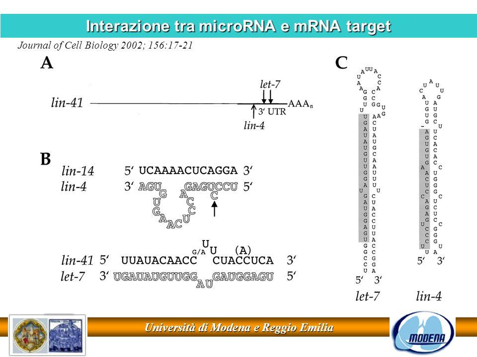 Università di Modena e Reggio Emilia Interazione tra microRNA e mRNA target Journal of Cell Biology 2002; 156:17-21