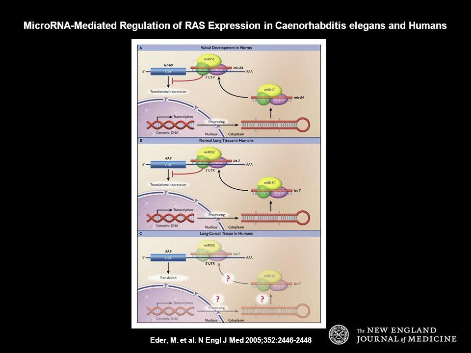 Eder, M. et al. N Engl J Med 2005;352:2446-2448 MicroRNA-Mediated Regulation of RAS Expression in Caenorhabditis elegans and Humans