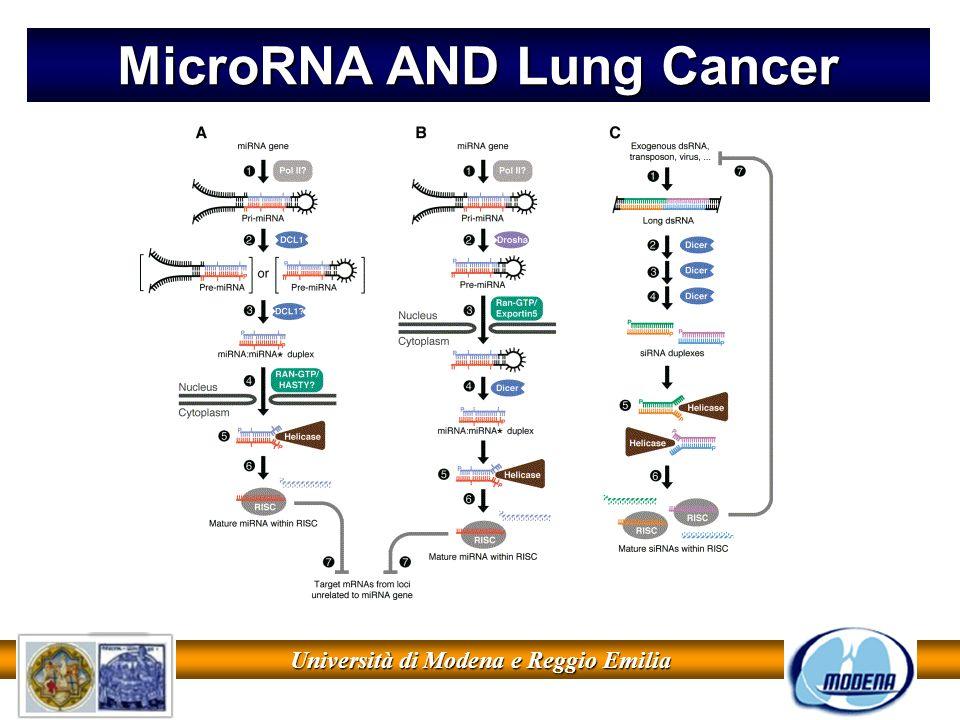 MicroRNA AND Lung Cancer Università di Modena e Reggio Emilia