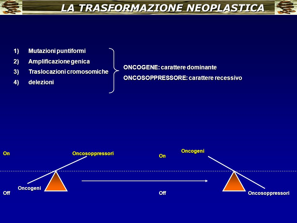 LA TRASFORMAZIONE NEOPLASTICA Oncogeni OncosoppressoriOn OffOncosoppressori Oncogeni Off On 1)Mutazioni puntiformi 2)Amplificazione genica 3)Traslocaz
