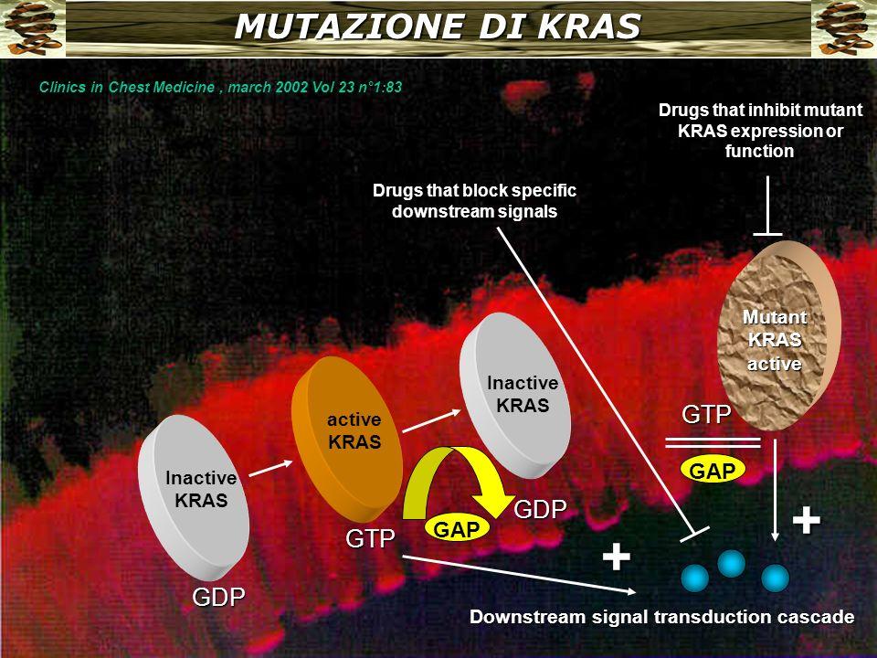 Ras e stimoli proliferativi Ras PDGFREGFR AF-6RGLPI3KRafRin1MekkNore1 Gap Junctions PLDAkt MAPK BCRJNK.