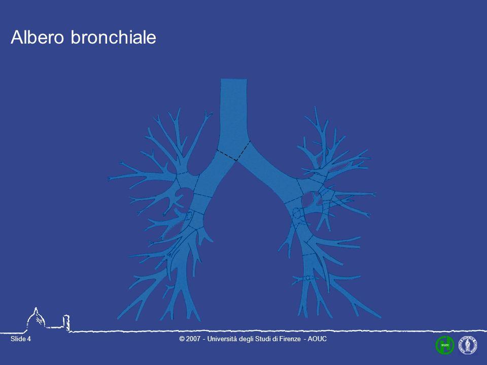 © 2007 - Università degli Studi di Firenze - AOUCSlide 4 Albero bronchiale