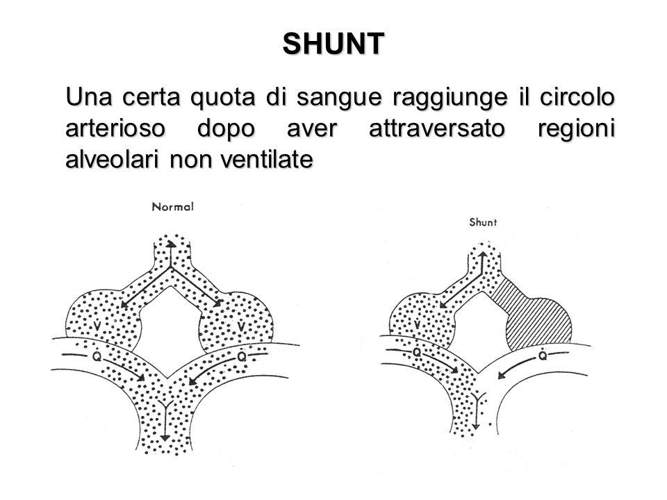 SHUNT Una certa quota di sangue raggiunge il circolo arterioso dopo aver attraversato regioni alveolari non ventilate