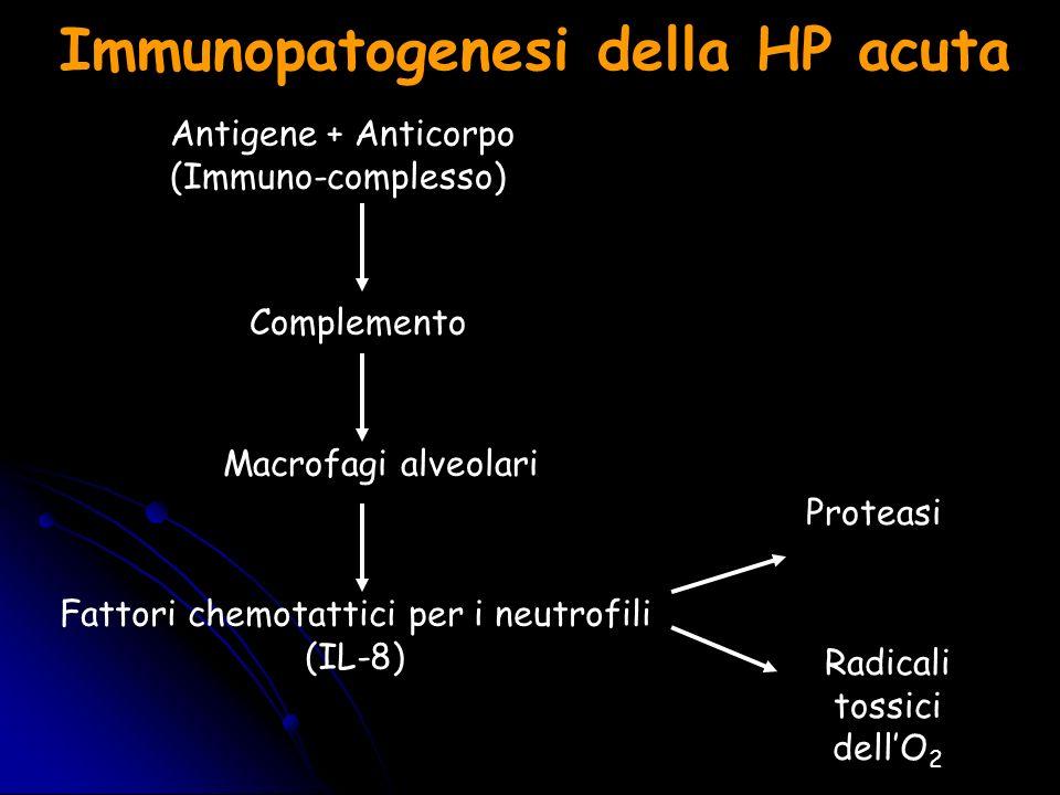Immunopatogenesi della HP acuta Antigene + Anticorpo (Immuno-complesso) Complemento Macrofagi alveolari Fattori chemotattici per i neutrofili (IL-8) P