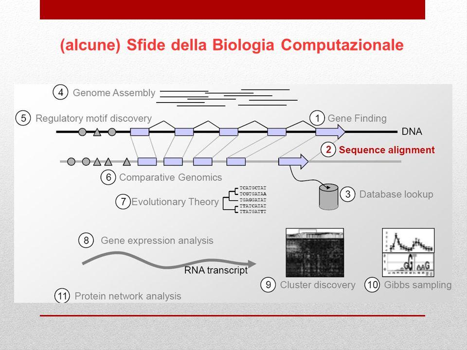 (alcune) Sfide della Biologia Computazionale