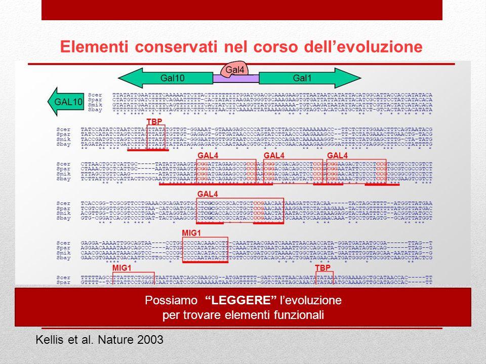 Elementi conservati nel corso dellevoluzione Kellis et al. Nature 2003 Possiamo LEGGERE levoluzione per trovare elementi funzionali