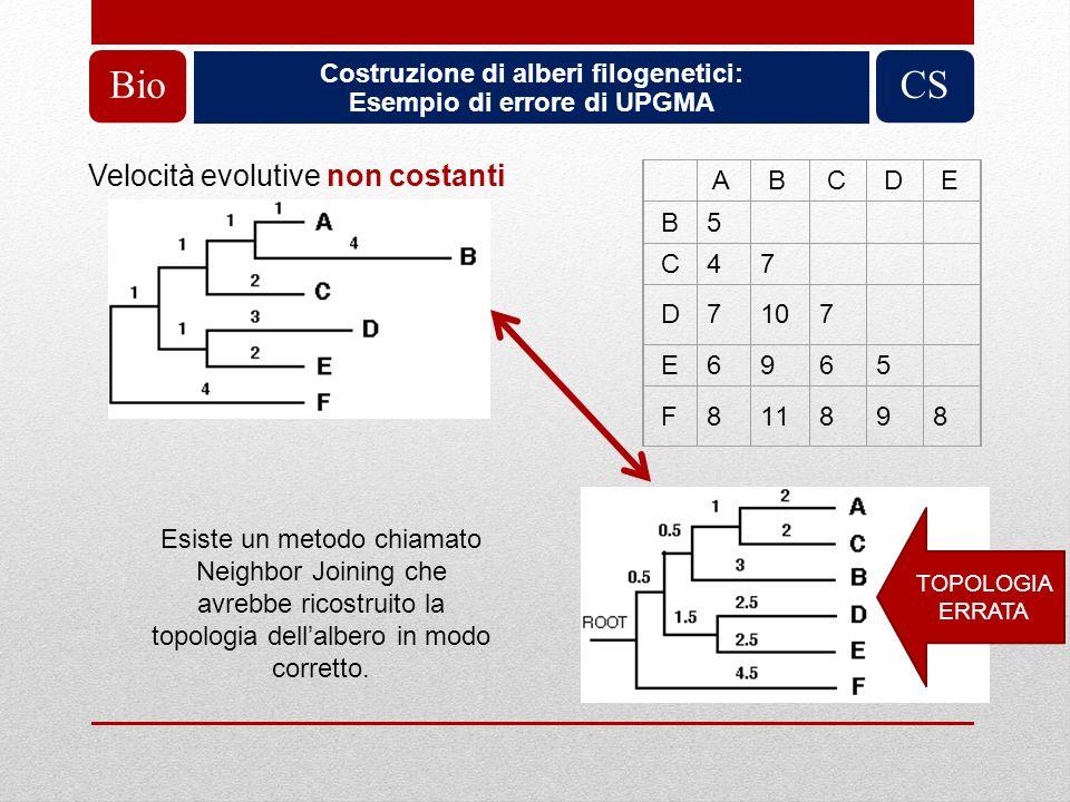 Costruzione di alberi filogenetici: Esempio di errore di UPGMA BioCS A B C D E B 5 C 4 7 D 7 10 7 E 6 9 6 5 F 8 11 8 9 8 Velocità evolutive non costan