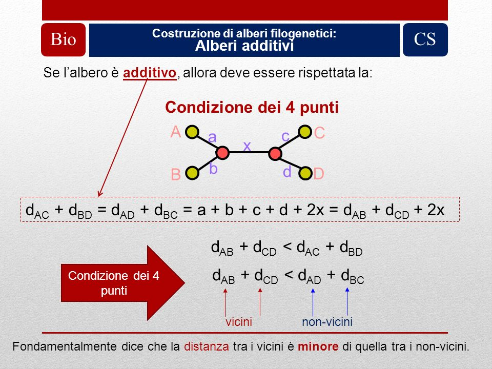 Costruzione di alberi filogenetici: Alberi additivi BioCS Condizione dei 4 punti A B C D d AC + d BD = d AD + d BC = a + b + c + d + 2x = d AB + d CD