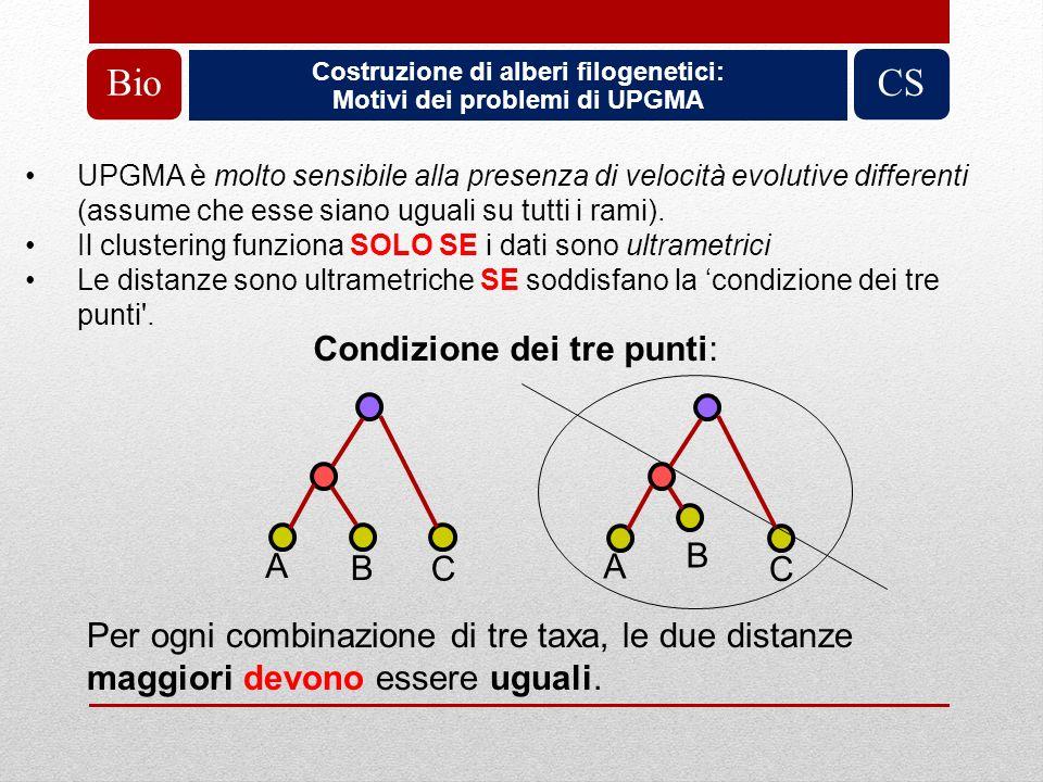 Costruzione di alberi filogenetici: Motivi dei problemi di UPGMA BioCS UPGMA è molto sensibile alla presenza di velocità evolutive differenti (assume