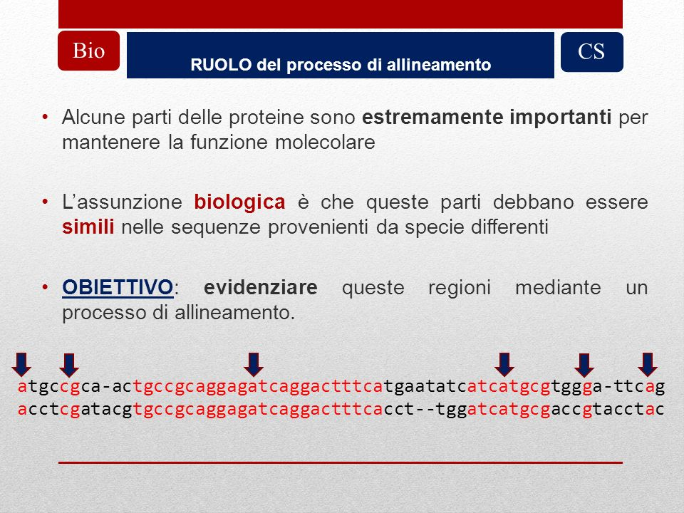 RUOLO del processo di allineamento Alcune parti delle proteine sono estremamente importanti per mantenere la funzione molecolare Lassunzione biologica
