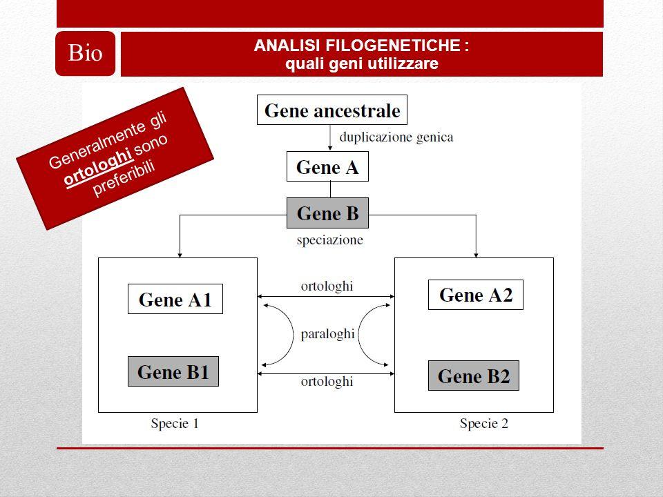 ANALISI FILOGENETICHE : quali geni utilizzare Bio Generalmente gli ortologhi sono preferibili