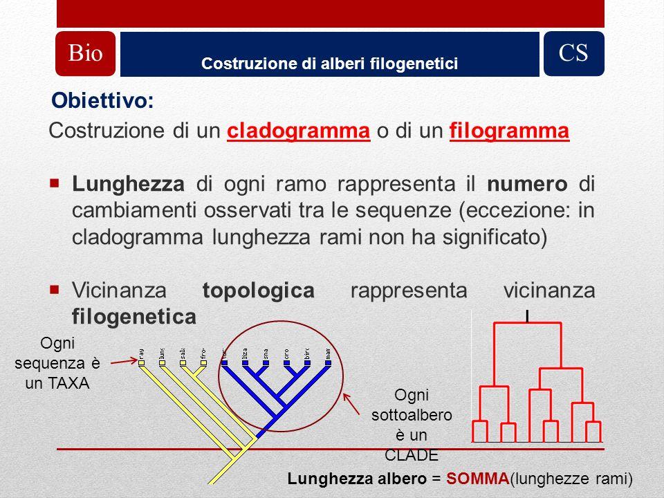 Costruzione di un cladogramma o di un filogramma Lunghezza di ogni ramo rappresenta il numero di cambiamenti osservati tra le sequenze (eccezione: in