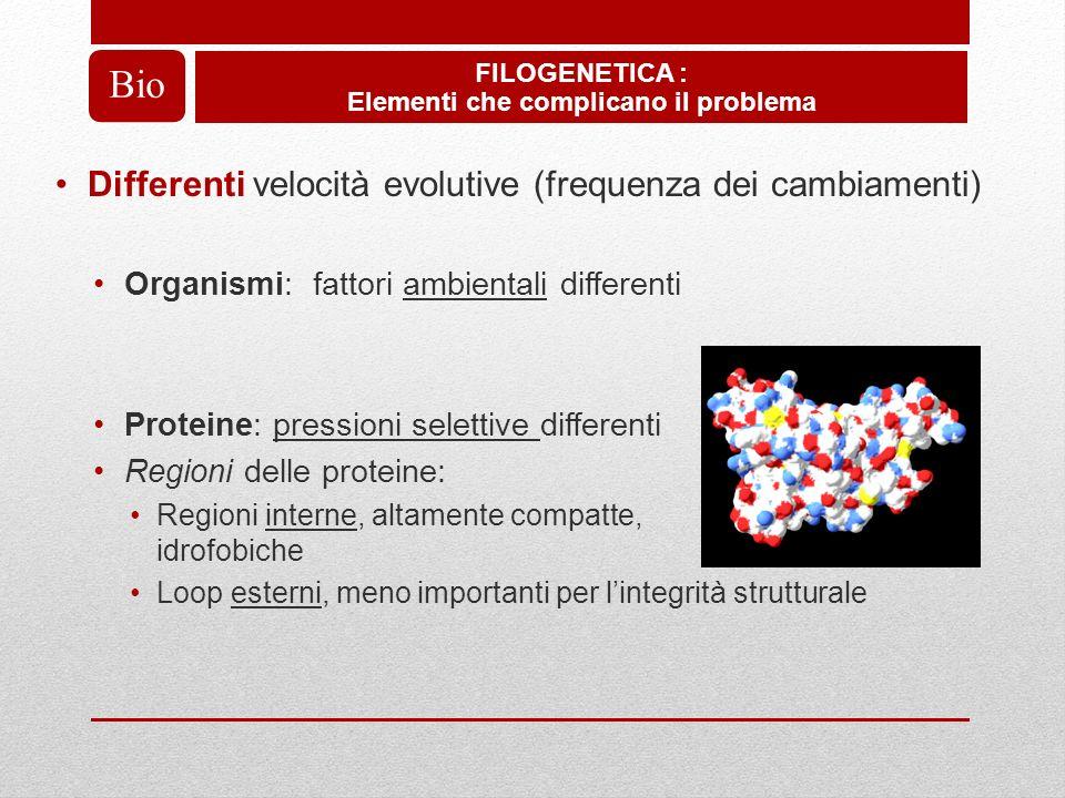 Differenti velocità evolutive (frequenza dei cambiamenti) Organismi: fattori ambientali differenti Proteine: pressioni selettive differenti Regioni de