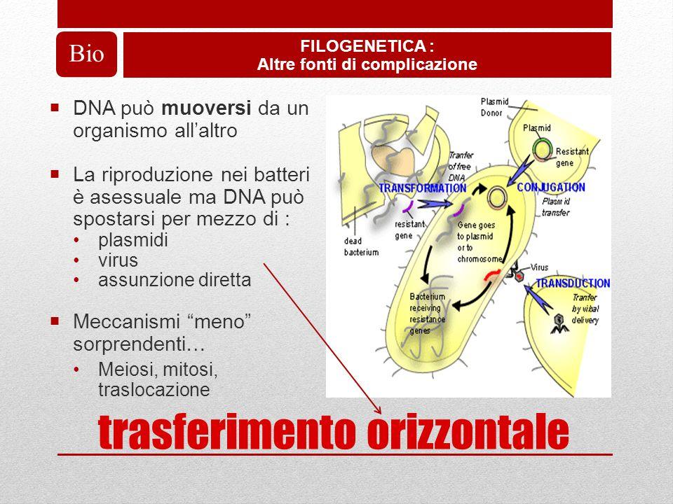 Albero reticolato FILOGENETICA : Effetto del trasferimento orizzontale di geni (HGT) sullalbero della vita Bio Specialmente vicino alla radice