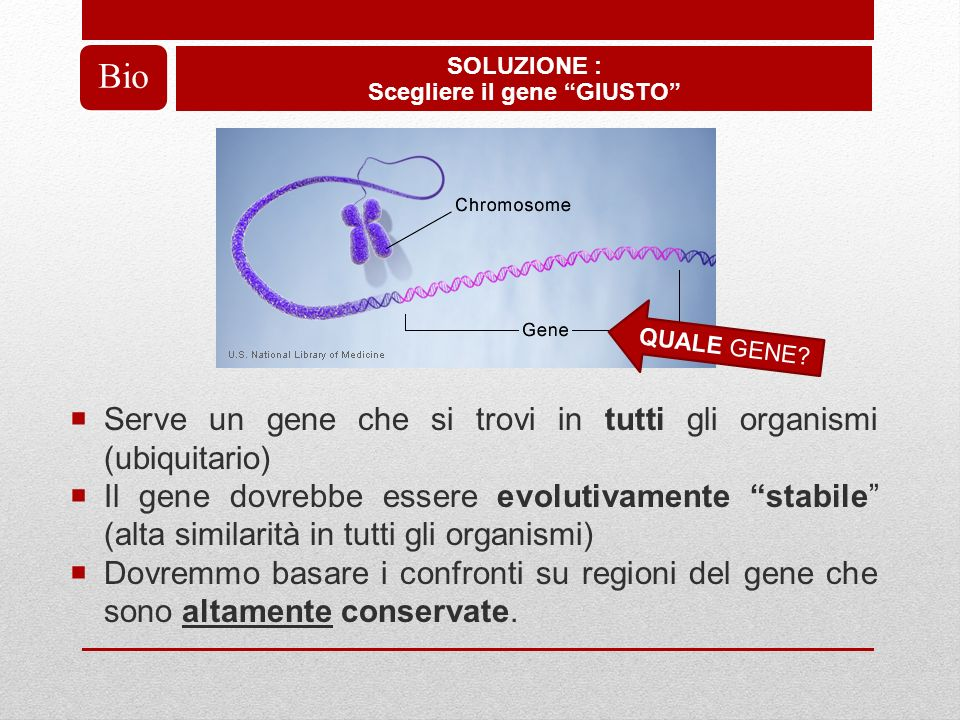 Serve un gene che si trovi in tutti gli organismi (ubiquitario) Il gene dovrebbe essere evolutivamente stabile (alta similarità in tutti gli organismi