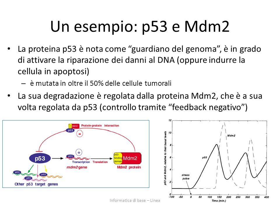 Un esempio: p53 e Mdm2 La proteina p53 è nota come guardiano del genoma, è in grado di attivare la riparazione dei danni al DNA (oppure indurre la cel