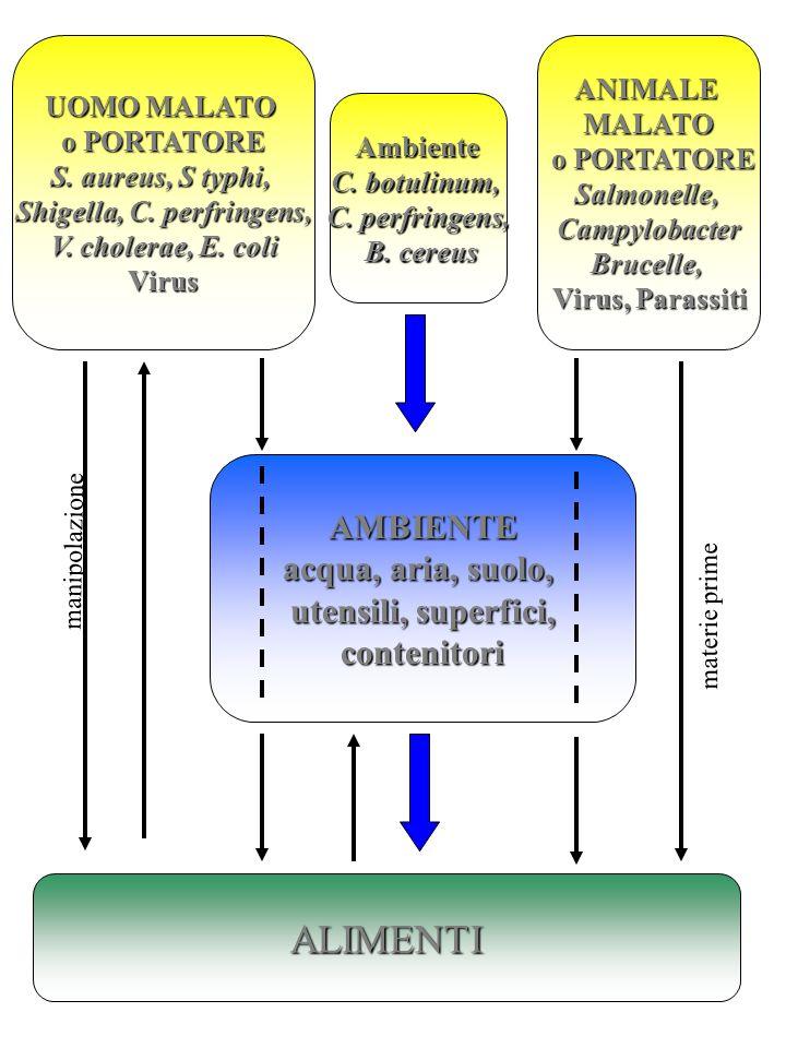 ALIMENTI UOMO MALATO o PORTATORE S. aureus, S typhi, Shigella, C. perfringens, V. cholerae, E. coli V. cholerae, E. coliVirus Ambiente C. botulinum, C