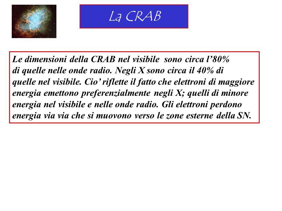 La CRAB Le dimensioni della CRAB nel visibile sono circa l80% di quelle nelle onde radio. Negli X sono circa il 40% di quelle nel visibile. Cio riflet