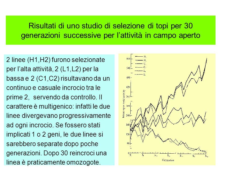 Risultati di uno studio di selezione di topi per 30 generazioni successive per lattività in campo aperto 2 linee (H1,H2) furono selezionate per lalta
