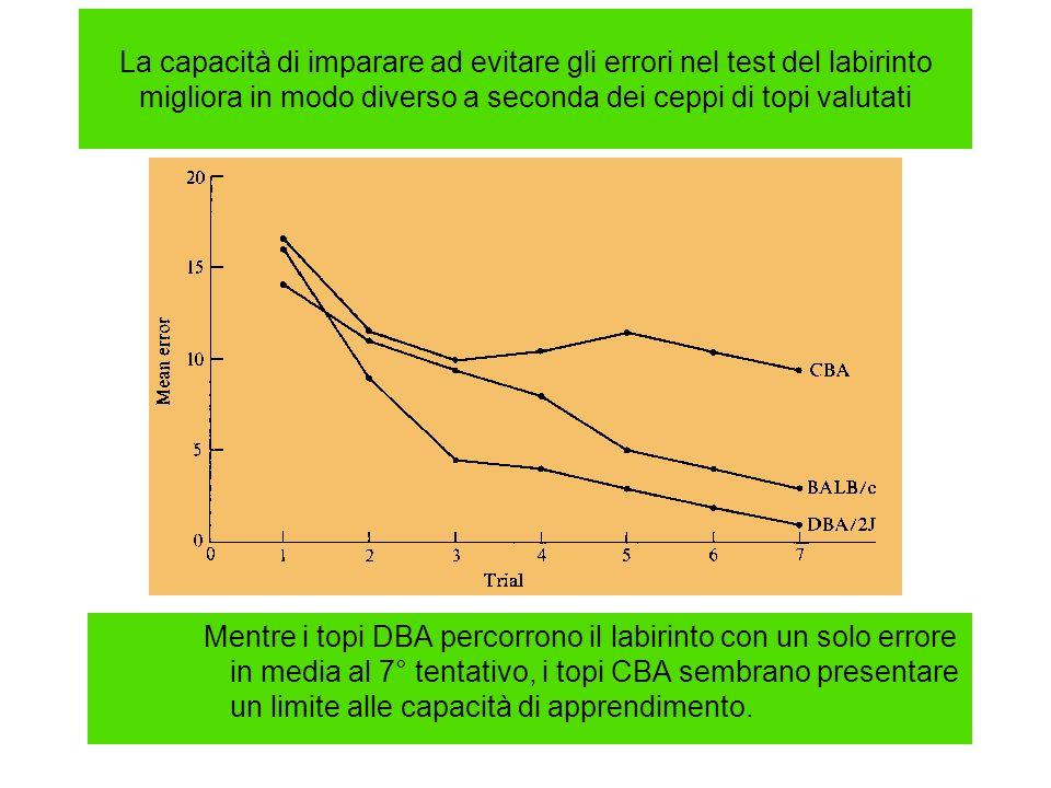 La capacità di imparare ad evitare gli errori nel test del labirinto migliora in modo diverso a seconda dei ceppi di topi valutati Mentre i topi DBA p