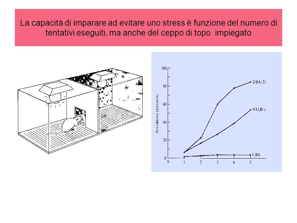 La capacità di imparare ad evitare uno stress è funzione del numero di tentativi eseguiti, ma anche del ceppo di topo impiegato