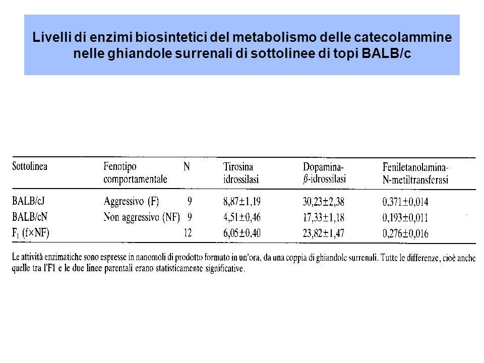 Livelli di enzimi biosintetici del metabolismo delle catecolammine nelle ghiandole surrenali di sottolinee di topi BALB/c