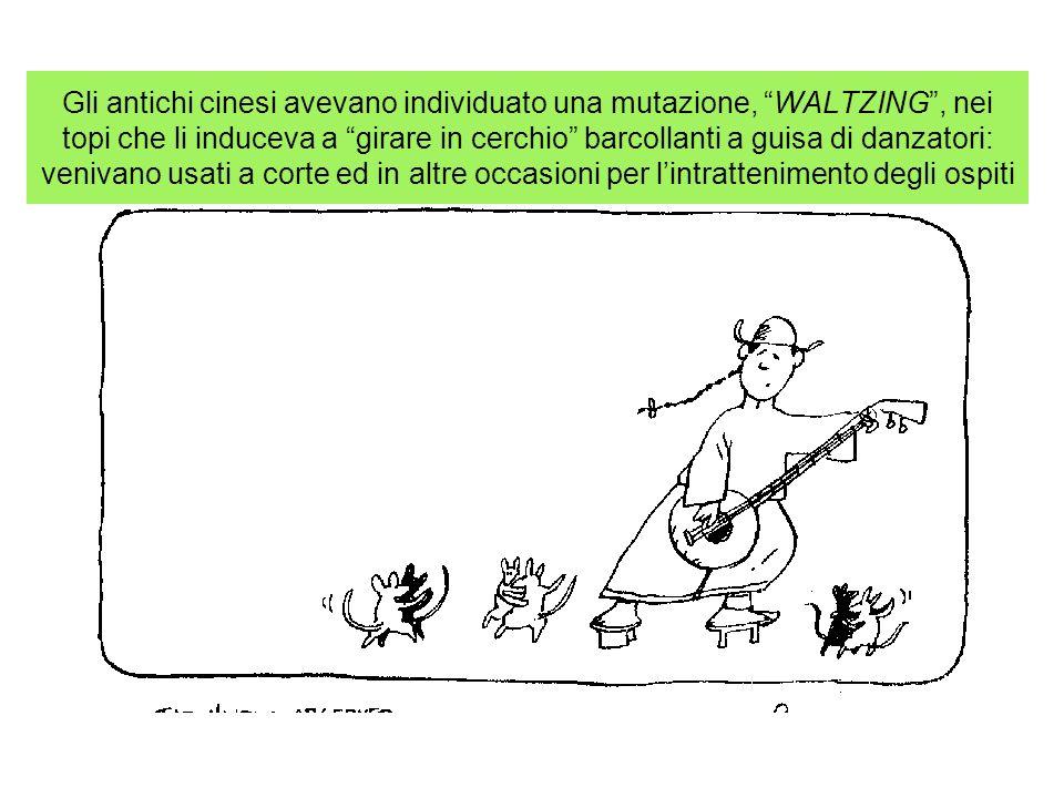 Gli antichi cinesi avevano individuato una mutazione, WALTZING, nei topi che li induceva a girare in cerchio barcollanti a guisa di danzatori: venivan