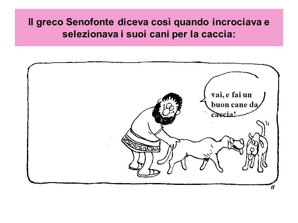 Il greco Senofonte diceva così quando incrociava e selezionava i suoi cani per la caccia: vai, e fai un buon cane da caccia!