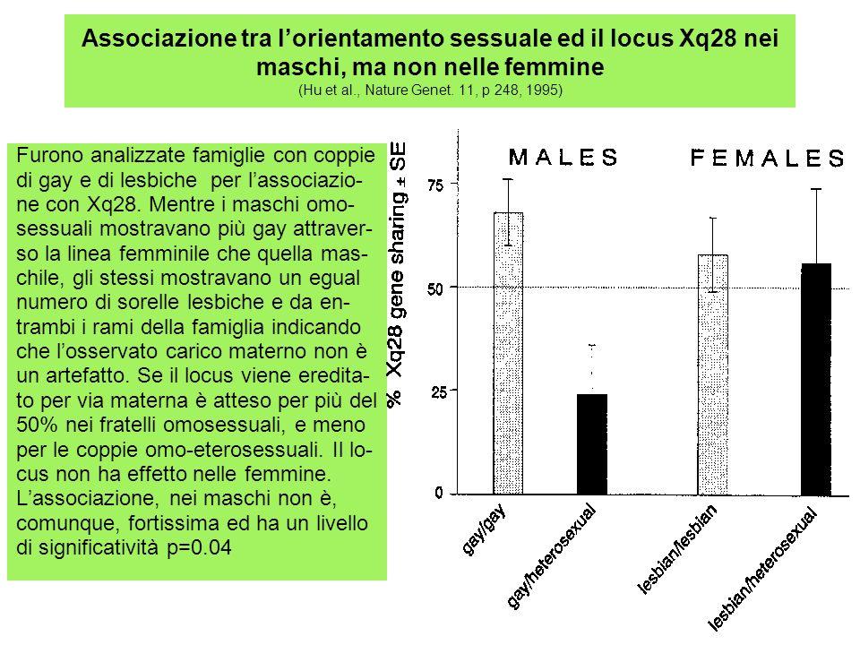 Associazione tra lorientamento sessuale ed il locus Xq28 nei maschi, ma non nelle femmine (Hu et al., Nature Genet. 11, p 248, 1995) Furono analizzate
