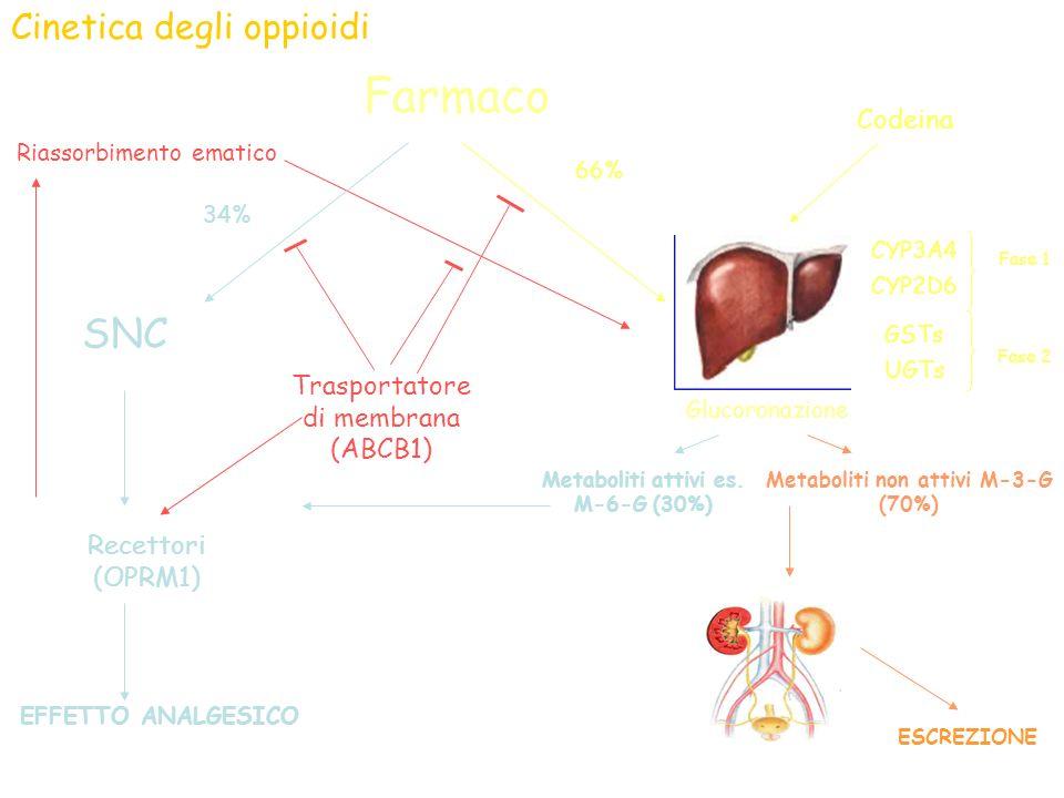 ESCREZIONE Cinetica degli oppioidi Farmaco Recettori (OPRM1) EFFETTO ANALGESICO SNC CYP3A4 CYP2D6 Fase 1 GSTs UGTs Fase 2 66% 34% Glucoronazione Metab