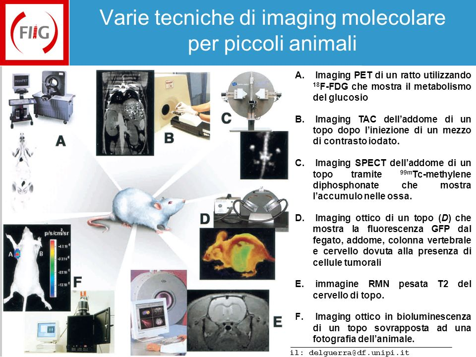Varese, 28 Febbraio 2008 e-mail: delguerra@df.unipi.it Molecular Imaging The Physics of PET The YAP-(S)PET Applications of the YAP-(S)PET Small animal CT Conclusions Acknowledgments Tumor imaging: Human glioma in rat with 18 F-FDG (PET) Rat with brain glioma Normal Rat Controls animals (Wistar) were compared with implanted rats using 18 F-FDG.