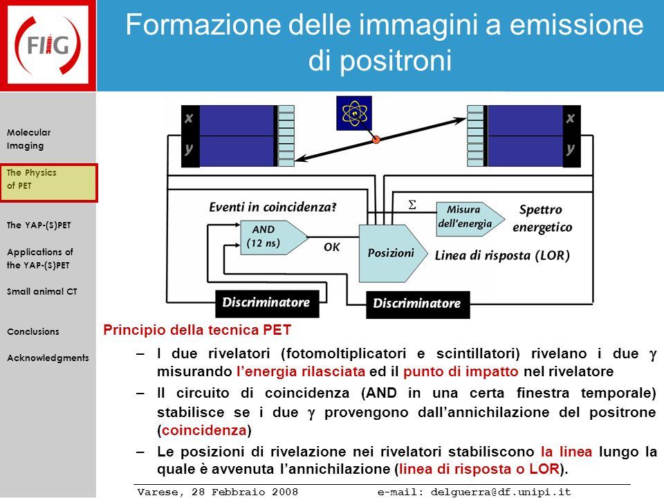 Varese, 28 Febbraio 2008 e-mail: delguerra@df.unipi.it Molecular Imaging The Physics of PET The YAP-(S)PET Applications of the YAP-(S)PET Small animal CT Conclusions Acknowledgments Brain metabolism in rat Ipotyroidism study with 18 F-FDG (PET) Rat with induced Ipotyroidism Normal Rat Normal rats (Wistar) were compared with rats with induced Ipotyroidism in terms of brain glucose consumption (FDG).