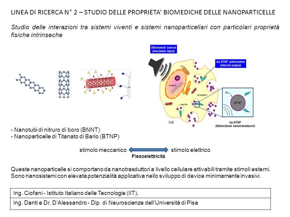 Studi di citocompatibilità di BNNT e BNTP condotti su vari tipi cellulari (umani ed animali) responsivi alla stimolazione elettrica (mioblasti, cardiomioblasti, cellule di tipo neuronale, osteoblasti primari umani, cellule staminali della polpa dentale etc.) hanno permesso di : -mettere a punto metodiche per valutare gli effetti di queste nanoparticelle sulla vitalità, sul metabolismo, lapoptosi ed il differenziamento cellulare - identificare la dose efficace da somministrare alle colture senza avere effetti avversi -verificare la localizzazione intracellulare delle nanoparticelle, principalmente allinterno di vescicole citoplasmatiche (Confocale, TEM) - verificare che il meccanismo di endocitosi è energia-dipendente Messa a punto dei sistema di stimolazione ultrasuoni-BNNT : - applicato a modelli di cellule neuronali come PC12 e neuroblastoma umano può stimolare in 9 giorni la crescita dei neuriti fino al 30% con significatività statistica - applicato a osteoblasti primari umani, porta gli stessi a raggiungere velocemente un fenotipo maturo, rivelato dallincremento della produzione di osteocalcina e calcio-fosfato Ciofani G, Ricotti L, Danti S, Moscato S, Nesti C, D Alessandro D, Dinucci D, Chiellini F, Pietrabissa A, Petrini M, Menciassi A.