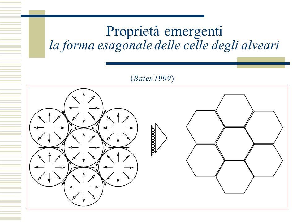 Proprietà emergenti la forma esagonale delle celle degli alveari (Bates 1999)