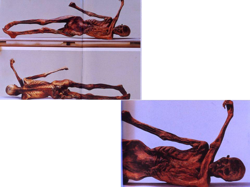 lesina di tarso di un piccolo ruminante: lestremità appuntita può forare pelli o tatuare, quella arrotondata è una spatolina