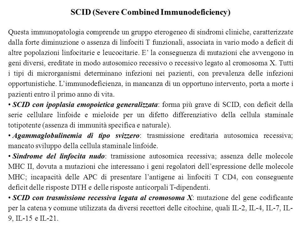 SCID (Severe Combined Immunodeficiency) Questa immunopatologia comprende un gruppo eterogeneo di sindromi cliniche, caratterizzate dalla forte diminuzione o assenza di linfociti T funzionali, associata in vario modo a deficit di altre popolazioni linfocitarie e leucocitarie.