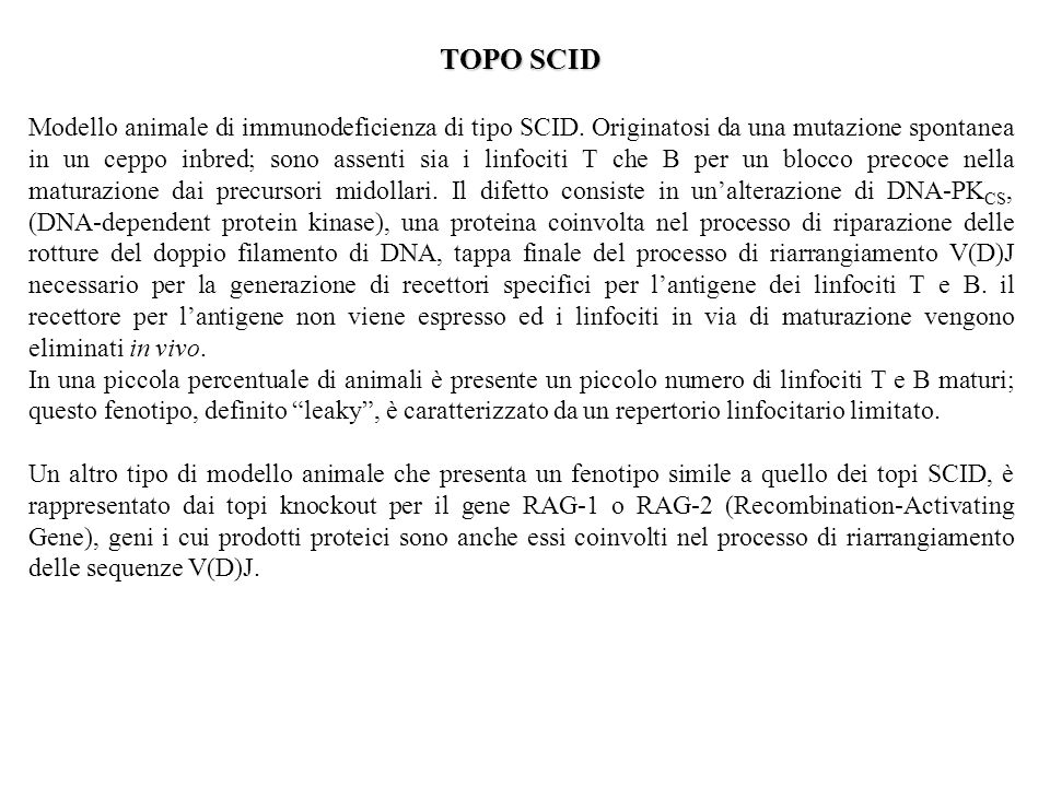 TOPO SCID Modello animale di immunodeficienza di tipo SCID.