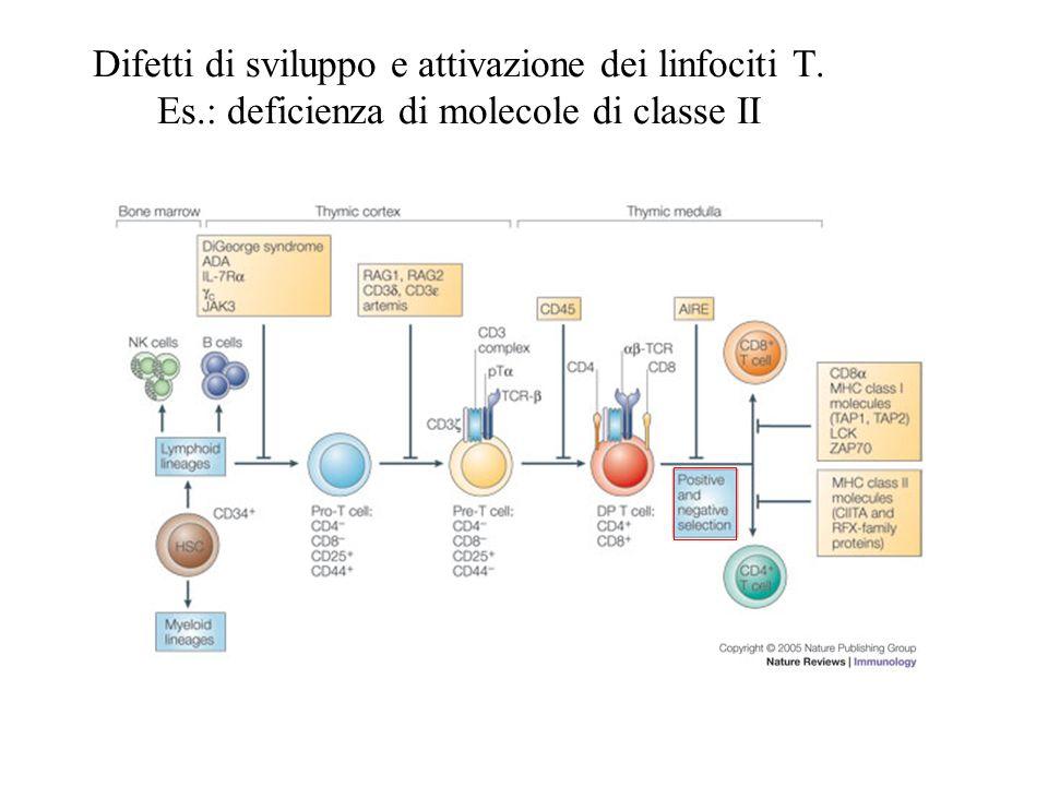 Difetti di sviluppo e attivazione dei linfociti T. Es.: deficienza di molecole di classe II