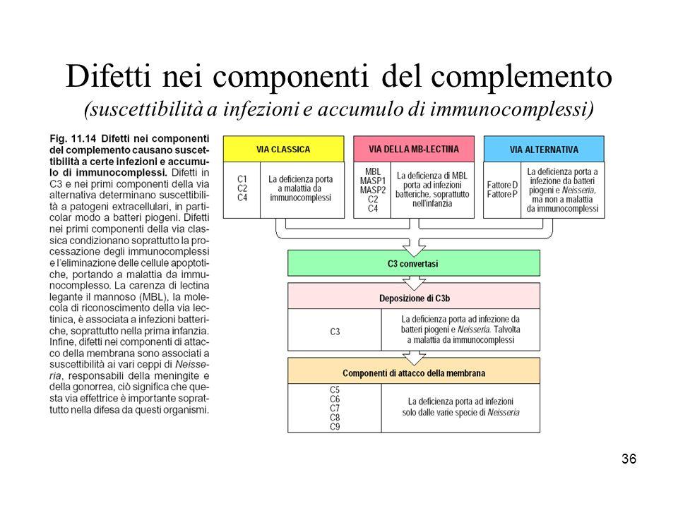 Deficit del complemento C3 C5 C6 C7 C8 C9 C5 C6 C7 C8 C9 C1 C2 C4 B B P P D D