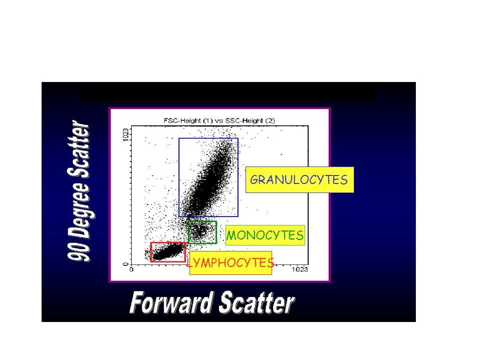 GRANULOCYTES MONOCYTES LYMPHOCYTES