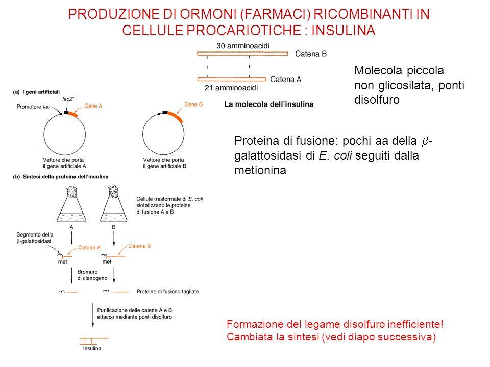 Proteina di fusione: pochi aa della - galattosidasi di E. coli seguiti dalla metionina PRODUZIONE DI ORMONI (FARMACI) RICOMBINANTI IN CELLULE PROCARIO