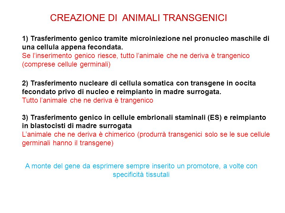 CREAZIONE DI ANIMALI TRANSGENICI 1) Trasferimento genico tramite microiniezione nel pronucleo maschile di una cellula appena fecondata. Se linseriment