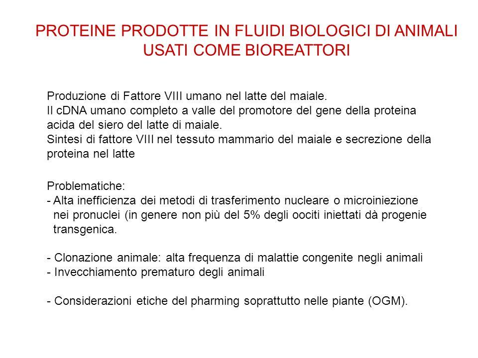 PROTEINE PRODOTTE IN FLUIDI BIOLOGICI DI ANIMALI USATI COME BIOREATTORI Produzione di Fattore VIII umano nel latte del maiale. Il cDNA umano completo