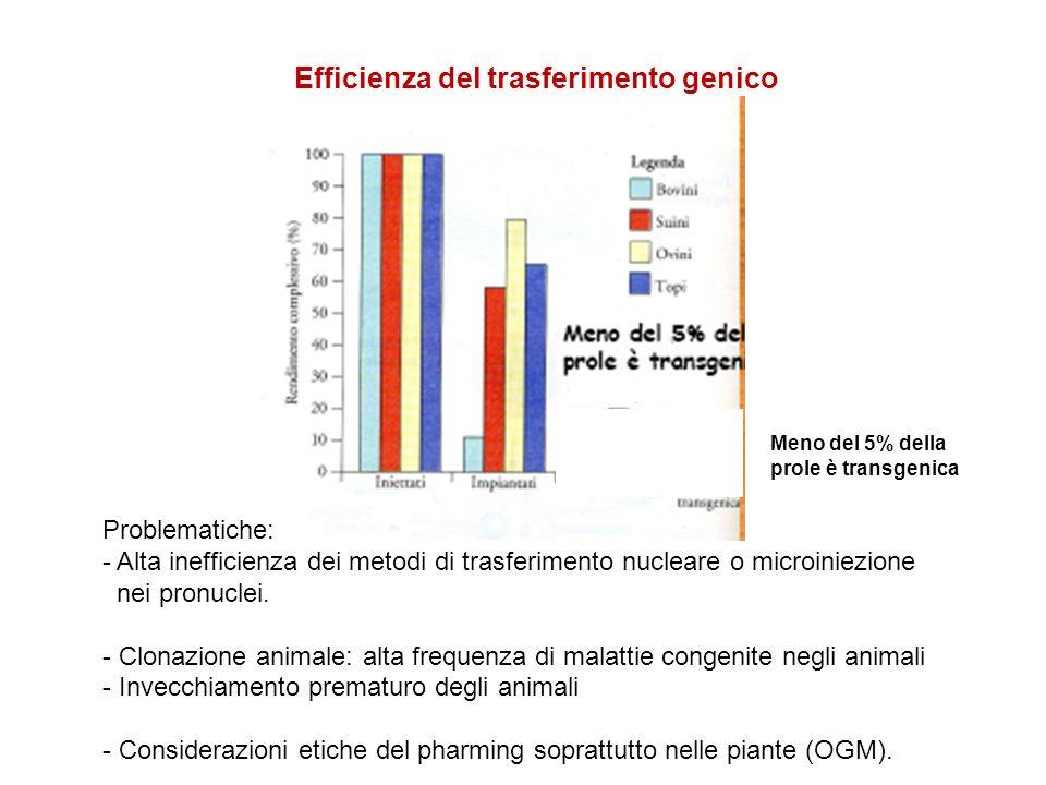 Meno del 5% della prole è transgenica Efficienza del trasferimento genico Problematiche: - Alta inefficienza dei metodi di trasferimento nucleare o mi