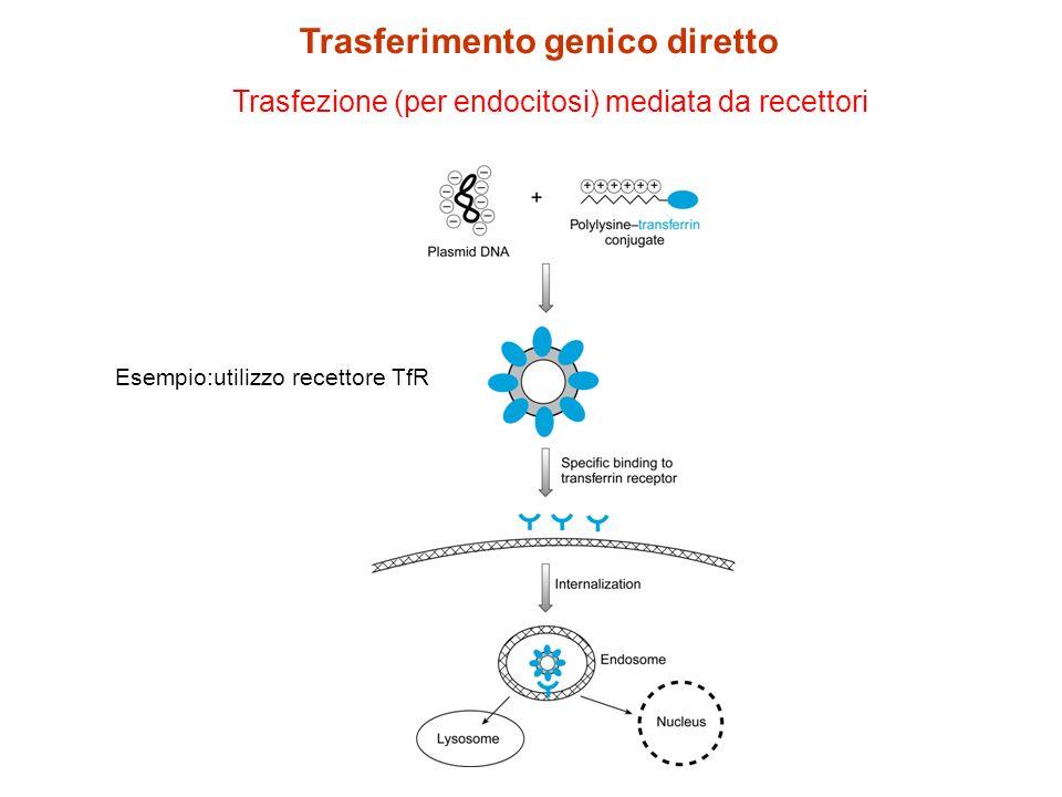 Trasfezione DNA libero con microiniezione Trasferimento genico diretto Inserzione di più copie di DNA lineare