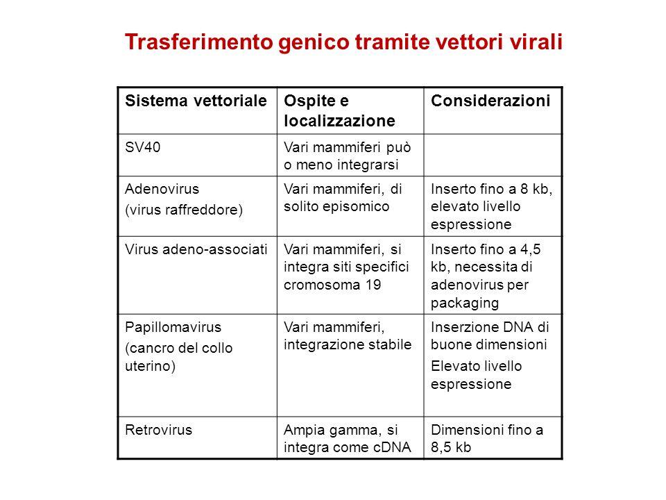 Sistema vettorialeOspite e localizzazione Considerazioni SV40Vari mammiferi può o meno integrarsi Adenovirus (virus raffreddore) Vari mammiferi, di so