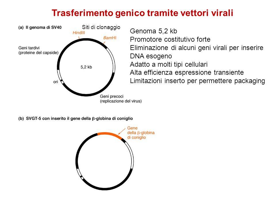 Virus non integrati: espressione transiente Virus integrati: espressione stabile, possibile mutagenesi inserzionale (per quelli che si integrano in maniera casuale nel genoma) Inserzione di geni (o molecole di DNA) di dimensioni limitate Tecniche con bassa efficienza e costi elevati Svantaggi Trasferimento genico tramite vettori virali