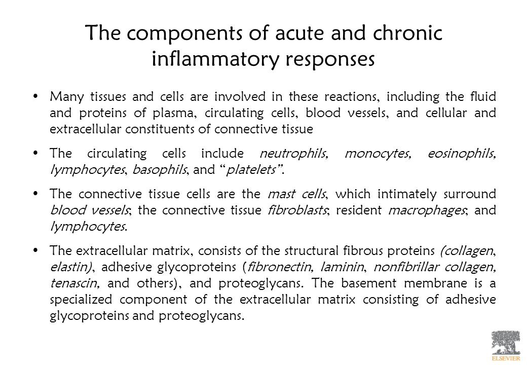 The components of acute and chronic inflammatory responses Many tissues and cells are involved in these reactions, including the fluid and proteins of plasma, circulating cells, blood vessels, and cellular and extracellular constituents of connective tissue The circulating cells include neutrophils, monocytes, eosinophils, lymphocytes, basophils, and platelets.