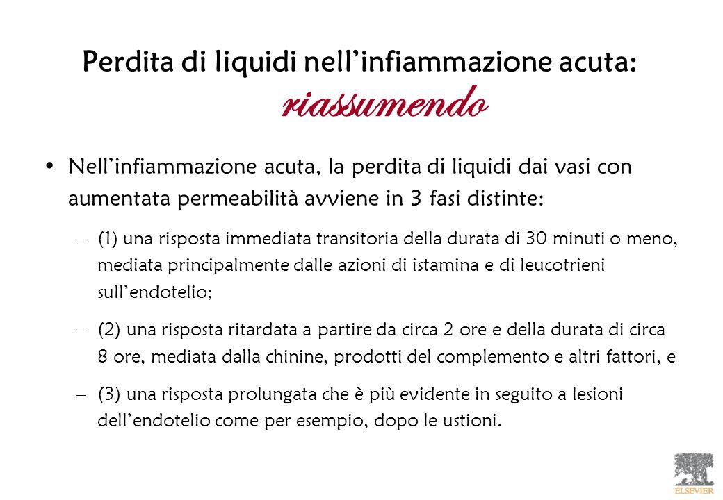 Perdita di liquidi nellinfiammazione acuta: Nellinfiammazione acuta, la perdita di liquidi dai vasi con aumentata permeabilità avviene in 3 fasi disti