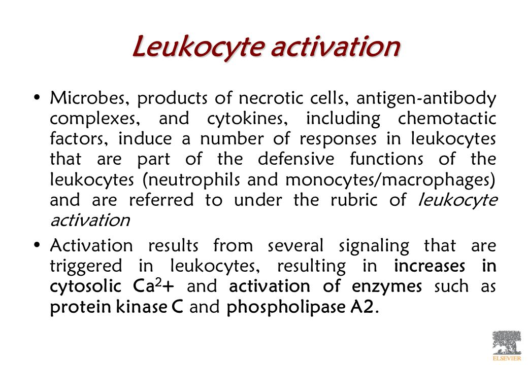 Leukocyte activation Microbes, products of necrotic cells, antigen-antibody complexes, and cytokines, including chemotactic factors, induce a number o